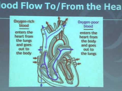 Heart Anatomy & Function - YouTube