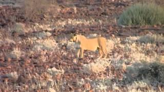 Salif Keita   Donsolou LEnfant Lion