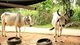Film Madhya Pradesh