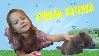 Котенок Марсик ВЛОГ новый питомец Никуси Покупаем котенка британского вислоухого видео для детей