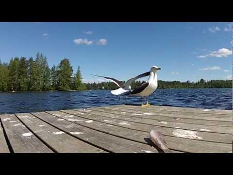 Arja Havakka - Lokki videó letöltés