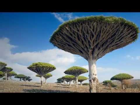 Socotra is an island and a small archipelago of four islands in the Arabian Sea, Yemen