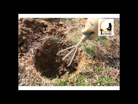 Песчаная почва и высокие грунтовые воды. Что и как сажать