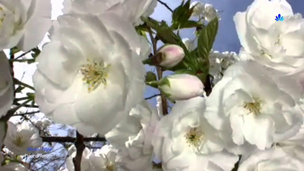 Michel Pepe Fleur D Amour Youtube