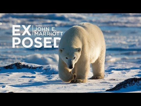 EXPOSED Ep. 10: Wildlife Photography | Expedition to the Arctic!