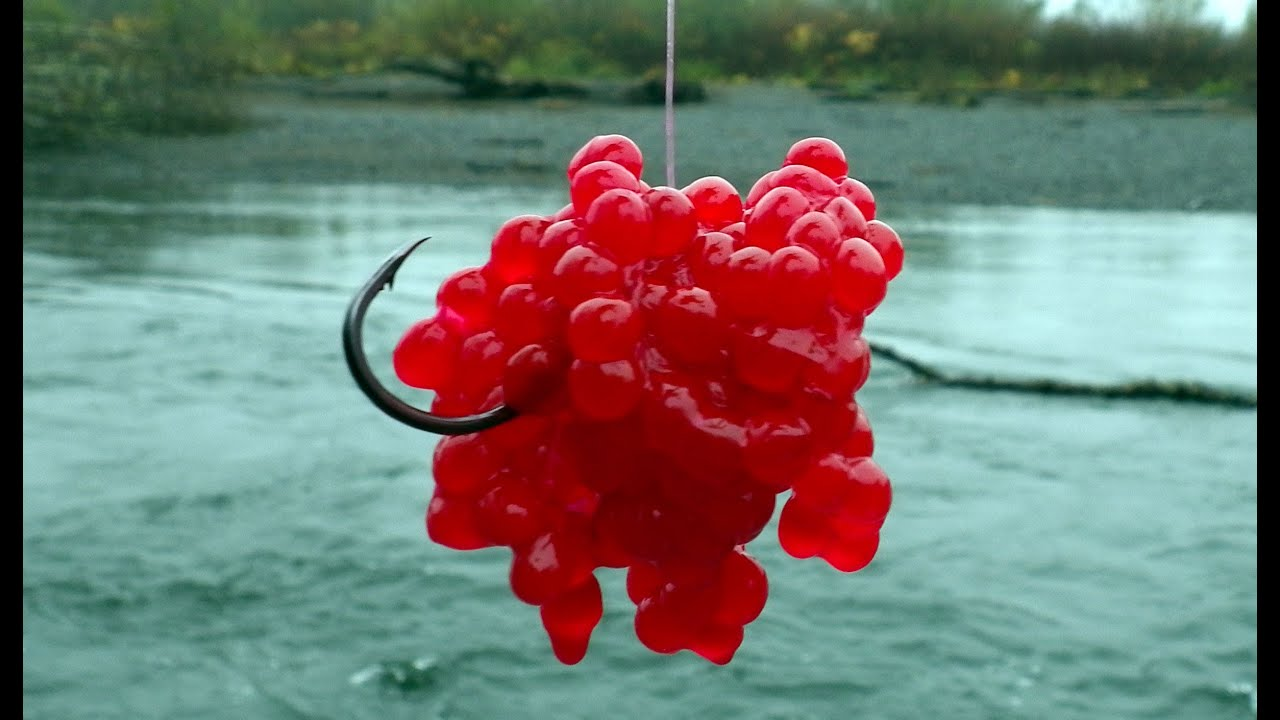 How to Hook Salmon Eggs for Bait