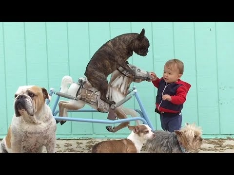 Best UNBELIEVABLE FUNNY MOMENTS & ANIMALS 2019