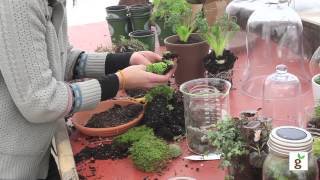 moss garden how to grow moss garden indoor gardening growing flowers plainting plants