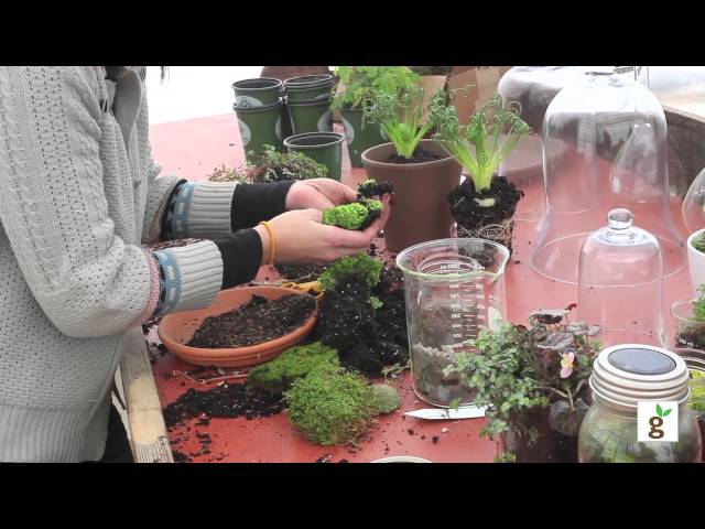 How To Build A Moss Terrarium Youtube