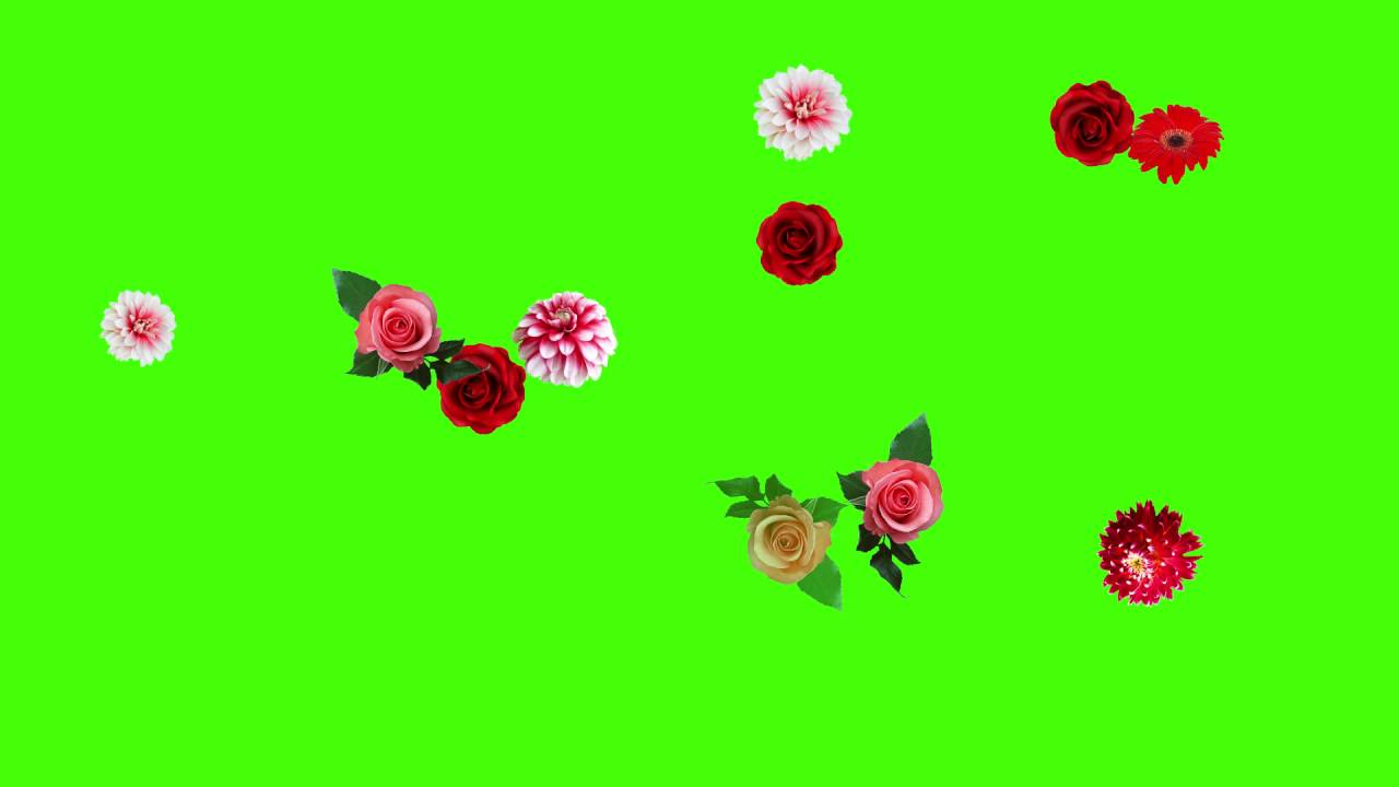 Flower Animation Video Free Download