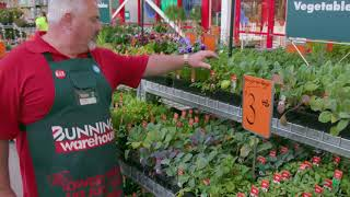 How To Design A Functional Garden - D.I.Y. at Bunnings