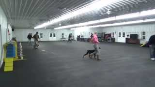 World class Dog Kennels, Chicago IL. Obedience Classes