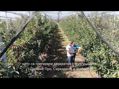 Когато Иновацията Сработва в Система с БАСФ Решения в Земеделието България