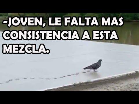 Una paloma caminando sobre hormigón fresco