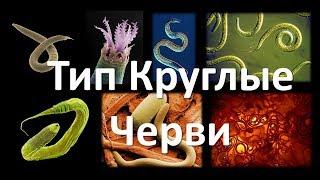 7. Круглые черви (7 класс) - биология, подготовка к ЕГЭ и ОГЭ 2019