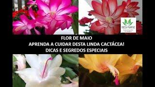 Segredos e Dicas de Como Cultivar Flor de Maio ou Flor de Seda