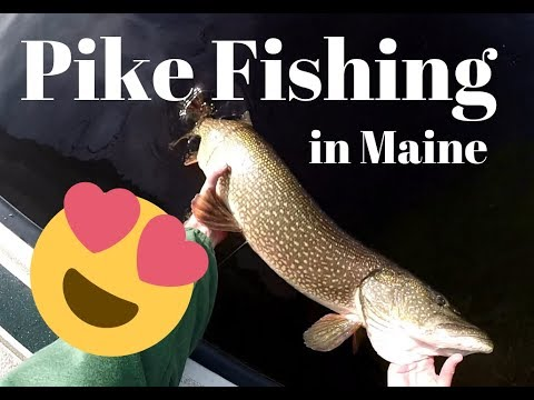 Pike Fishing On The Androscoggin River