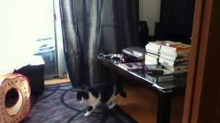 黒猫が先住のオス(2歳半)、白黒(短毛)が新入りのメス(2歳)。さす...