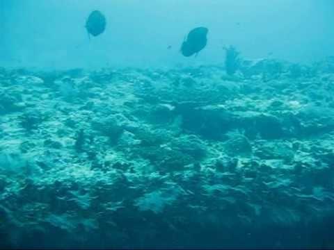 xav-photo.blogspot.com, kuredu, maldives, plongée, diving, underwater, swimming, reef, underwater diving, scuba, travel log, wreck, épave