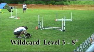 2010-06-06 - Scraps the Dog CPE Agility Runs