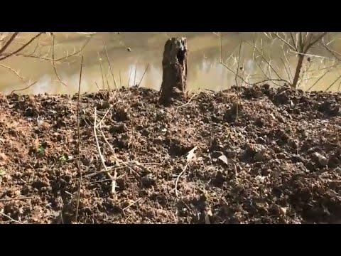 Hog Hunting Game Lands - Mocksville, NC, Davie County ALCOA-South