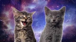 Котята поют дилекотес