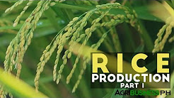 thesis on rice business in the philippines