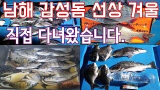 겨울시즌 마릿수 조황 남해 선상 감성돔낚시 제수고기 준…