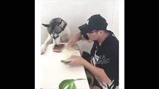 Смешные животные подборка коротких видео