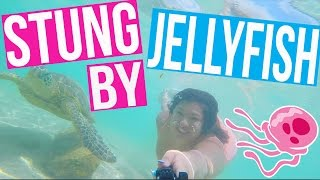 STUNG BY A JELLYFISH + SWIMMING WITH DOLPHINS AND TURTLES!!