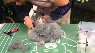 Как подстричь ангорского кролика