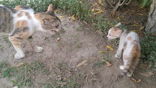 Mother Cat Hissing On Newly Rescued Kitten