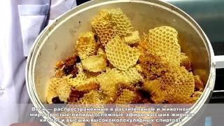 урок 5 пчеловодство Тренер Дуйшеналиев Ж.Б.