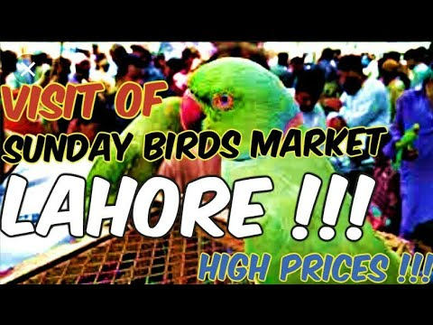 VISIT OF SUNDAY BIRDS MARKET LAHORE SHALIMAR GARDEN | PRICES ARE HIGH | OCTUBER 2017