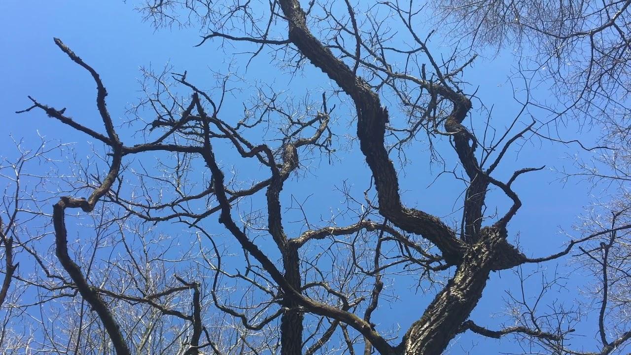 Filosofía en el bosque. Las raíces del cielo 2.