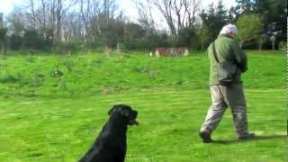 Gun Dog Training By David Will.