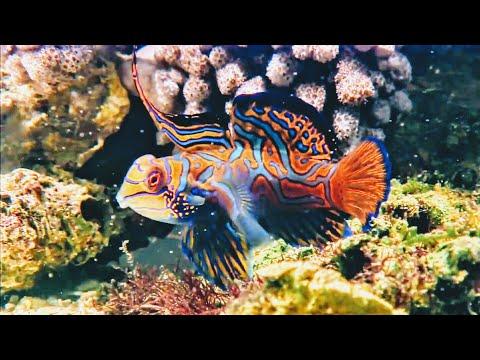 Beautiful nature deep sea cuteness video HD 2018
