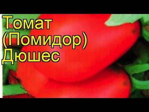 Томат обыкновенный Дюшес. Краткий обзор, описание характеристик, где купить семена