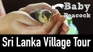 Village Life in Sri Lanka - Off the Beaten Path w\ Ella Tours