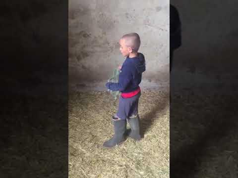 Bimbo di 8 anni che bestemmia in dialetto Veneto