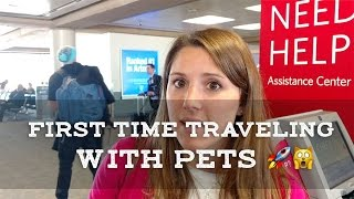 Cats on a Plane!  First Time Traveling with Cat