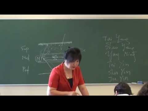 MTC y Acupuntura: meridianos yin y meridianos yang
