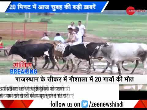 Morning Breaking: 36 cows found dead In Delhi shelter; raises questions on authorities