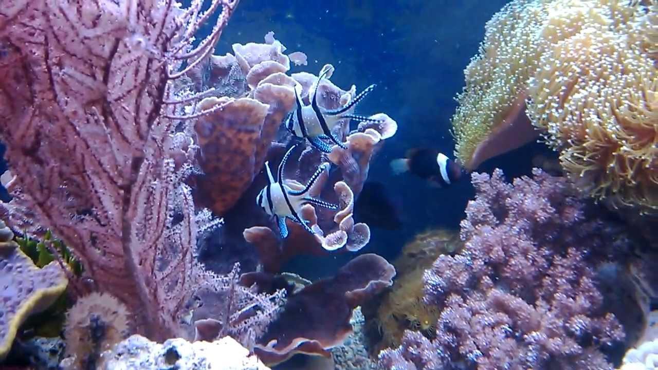 how to make a aquarium plenum