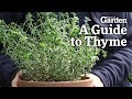 A Guide to Thyme