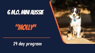 MINI AUSSIE / DOG TRAINING