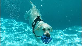 LABRADORS DIVE UNDER WATER WITH GOPRO!! (INCREDIBLE)