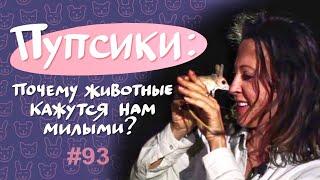 Пупсики: почему животные кажутся милыми? // Всё как у зверей #93