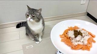 【悲報】猫に初めて手作り料理を振る舞ったらこうなった…