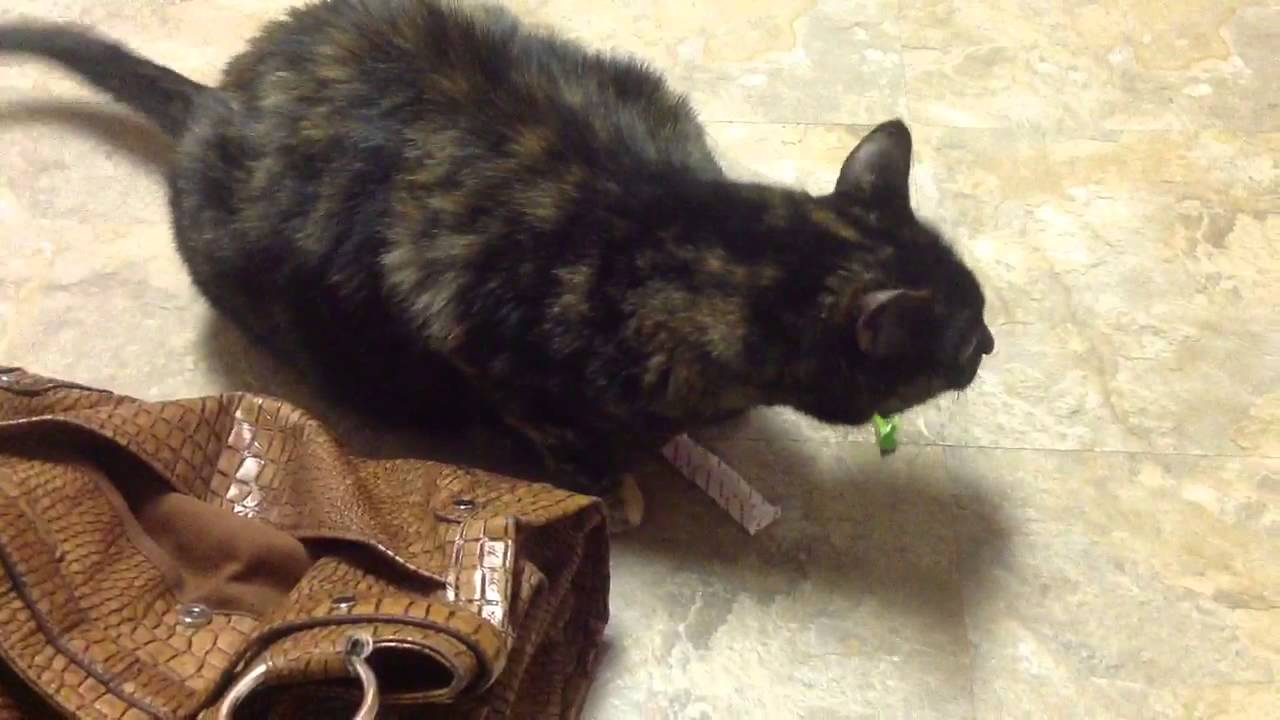 cat wants to eat double mint gum youtube. Black Bedroom Furniture Sets. Home Design Ideas